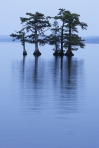 Reelfoot Lake State Park, Tennessee