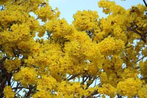 close up flower tree_compressed
