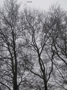 Nashville winter trees_Resized_with name