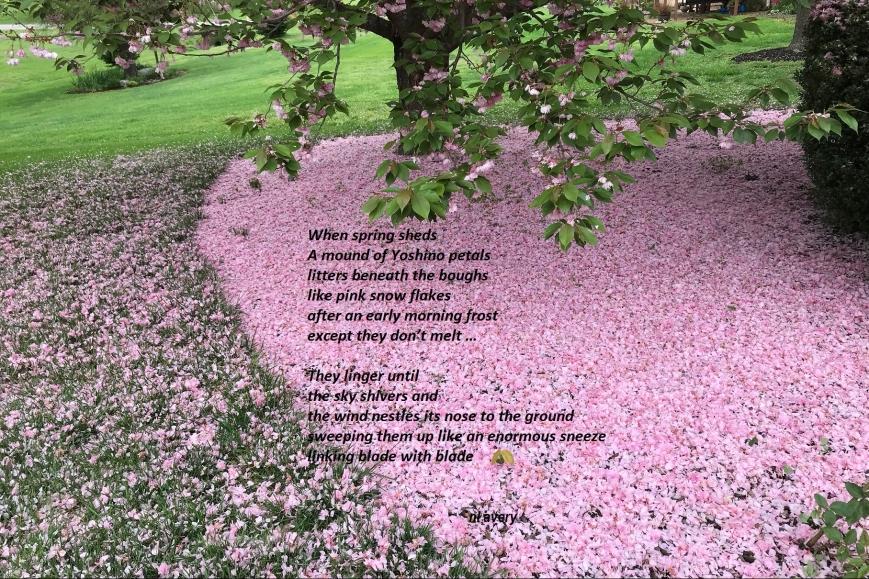 poem-img_20391.jpg